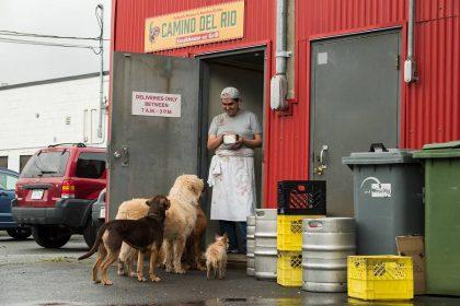 """Juosta visai šeimai """"Belos kelionė namo"""" žvaigžde pavertė benamę mišrūnę: ji – išties ypatingas šuo"""