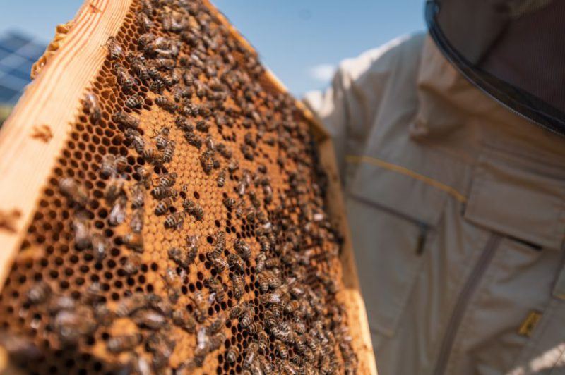 Lietuvoje – pirmoji nutolusi saulės jėgainė su bičių aviliais