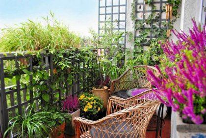 Sodas balkone – apie dekoratyvinius augalus ir jų priežiūrą miesto gyventojams