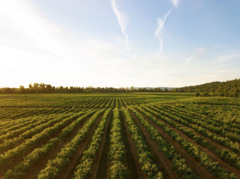 Būsimieji žemės ūkio specialistai skatinami valstybinėmis stipendijomis