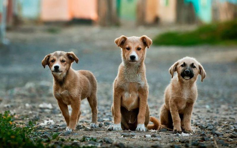 """Gyvūnų prieglaudoms paremti """"Iki"""" skiria 30 tūkst. eurų"""